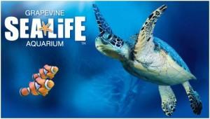 Grapevine Texas gets new Sea Life Aquarium + Contest for ...