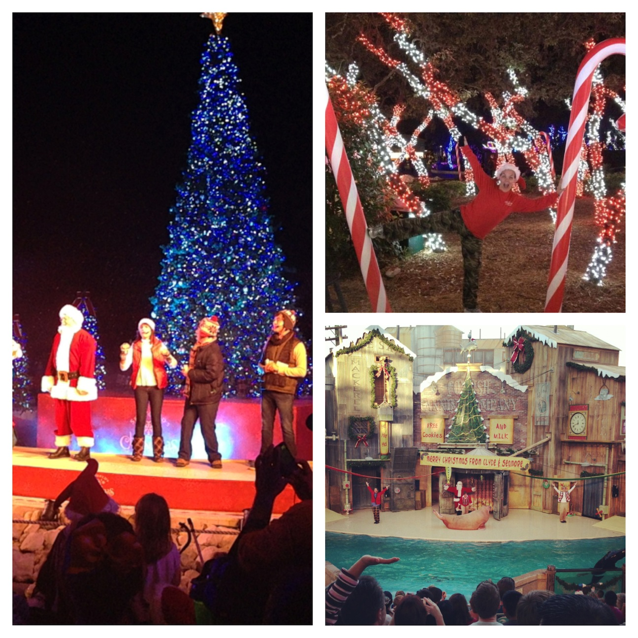 Christmas Tree San Antonio: Seaworld San Antonio Christmas Fun