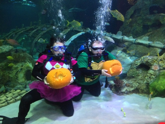 ended dfw frightful family fun at sea life aquarium giveaway my crazy savings. Black Bedroom Furniture Sets. Home Design Ideas