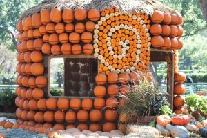 Pumpkins are out at The Dallas Arboretum (+ other activities)