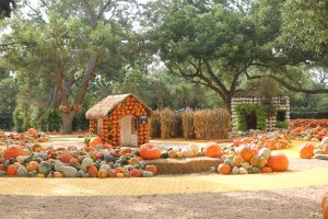 Pumpkin Village is perfect at The Dallas Arboretum